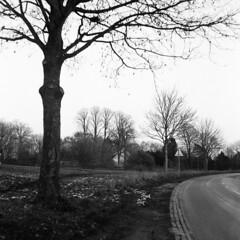 Vejtræ (holtelars) Tags: mamiya mamiyac220f c220f tlr twinlensreflex twinlens mamiyasekor 105mm f35 6x6 square squareformat 120 film 120film analog analogue foma fomapan fomapan100 fomapan100professional 100iso mediumformat blackandwhite classicblackwhite bw ishootfilm monochrome filmforever filmphotography xtol larsholte homeprocessing denmark danmark roadside tree cottage