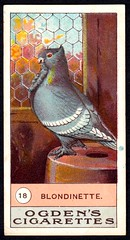 Cigarette Card - Blondinette Pigeon (cigcardpix) Tags: cigarettecards advertising ephemera vintage birds