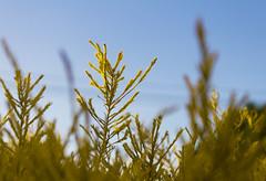 Macro practice on a Coleonema (|Sarah|) Tags: macro closeup plant coleonema nature southaustralia australia canon1200d photography