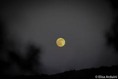 Moon in woods (ElisaArduini) Tags: moon night woods nature natura outdoor palombara palombarasabina italia italy notte luna photography fotografia flickr photo photos foto nikon d3200 nikond3200