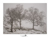 Trio (shaun.argent) Tags: trees tree morning mist misty shaunargent seasons snow snowfall winter nature weather