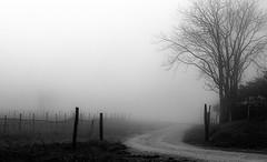Pelago Toscana (gi@nnino) Tags: winter fog inverno film blacknwhite bianconero nebbia analogphotography analogicait analogic kodak kodaktmax400 kodakd76 develop nikon nikonfe2 50mm campagna