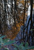 水の中の秋 (Alba*SS) Tags: 裏磐梯 落葉