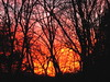 sunset (Hayseed52) Tags: sunset fire color intense trees tree