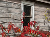 2017-10-22_10-43-51 Sumac (canavart) Tags: abandoned church autumn princeedwardcounty ontario canada sumac window weathered wood wmchurch 1871 rustic