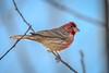 2018 birds (DigiDreamGrafix.com) Tags: 2018 birds winter january snow cold sunny flying animal byrd birdies birdy cute adorable tiny fellass