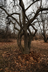 29/365 (Garen M.) Tags: nikond850 woods selfportrait trees nikkor2470mmf28