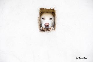 SHF_2907_Dog