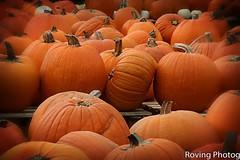 Pumpkins (robtm2010) Tags: yarmouth massachusetts usa newengland capecod canon canont3i t3i food pumpkins fall