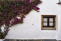 Climbing the Wall (Jocelyn777) Tags: houses whitehouses villages whitevillages windows flowers plants bougainvillea stone cobblestones alentejo monsaraz portugal travel saariysqualitypictures