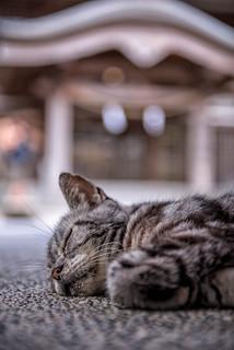 Okayama street photography ,Japan