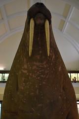 Horniman Museum walrus (louisemarston) Tags: london uk hornimanmuseum foresthill walrus
