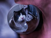 Gandalf in a bubble (PDKImages) Tags: nanosphere sphere orb perspective bends art colours ball crystalball cat ragdollcat