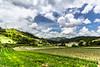 Plantação de hortaliças em Vieira, Teresópolis (Miro Carvalho) Tags: hortaliças agricultura montanha céu nuvens paisagem rural campo hortifrutigranjeiro tempero