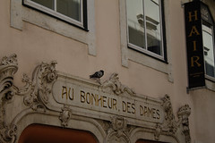Lisbon (Caró) Tags: lisboa lisbon portugal europa europe euro eu ue outdoors outdoor street candid city cidade ciudad ciutat urban urbano sun sunny verão verano sommer summer chiado aubonheurdesdames pigeon pombo pomba bird pássaro sign