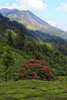 The PRIMARIES (Debanjan Das Gupta) Tags: kerala munnar india debanjanphotographycom