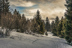 Swiss Forest (tehroester) Tags: nature switzerland forest tree clouds sony alpha 7 samyang snow winter golden hour colours 35mm mountains landscape