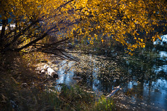 Rocky Mountains (heinz homatsch) Tags: rockymountains canada nationalpark jaspar autumn lakes nature landscape