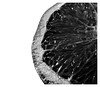 (hammer.adrienn) Tags: blackandwhite white black bw macromondays citrus food macro orange