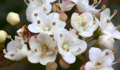 Little Flowers (Nelson-V.) Tags: