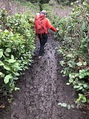 Cape Falcon Hike (Just Peachy!) Tags: oregoncoast oregon capefalcon oswaldweststatepark