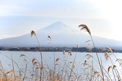 Mt. Fuji (雷太) Tags: japan fujikawaguchiko yamanashi fujiyama mount fuji lake
