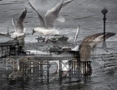 Seaside winter (Gill Stafford) Tags: gillstafford gillys image photograph wales northwales conwy llandudno pier winter january tourist victorian mono blackandwhite doubleexposure gulls birds