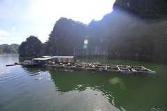 Amazing fishing farm at the Ha Long Bay in Vietnam #travellife #farming #seafood #adventure #halongbay #vietnam #fishing #igtravel #explore #igvietnam #asia #landscape #lensflare #touristlife (Het Fotofabriekje) Tags: travellife farming seafood adventure halongbay vietnam fishing igtravel explore igvietnam asia landscape lensflare touristlife
