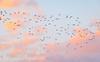 Birds in the Sky (Francesco Impellizzeri) Tags: trapani sicilia italy canon landscape birds sky clouds