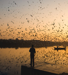Birds of Yamuna (bhatianishkam) Tags: birds yamunaghat india reflection newdelhi sunrise goldenhour flyingbirds siberianseagull boat boatman