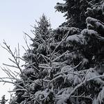 Harz-Oderbrueck_e-m10_1012053829 thumbnail