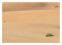 Three Layers (jelleteusink) Tags: desers sand patterns nature simple plants