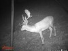 Texas Private Whitetail Lodge - Junction 40