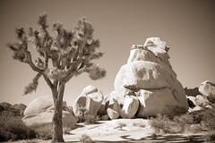 Scale (Rice Bear) Tags: california joshuatreenationalpark desert boulders blackandwhite blackwhite sepia nature landscape mountain climbers fuji x100t travel travelgram