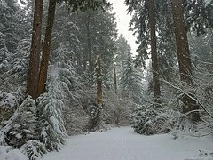 A snowy trail (walneylad) Tags: kirkstonepark westlynn lynnvalley northvancouver britishcolumbia canada snow snowstorm snowflakes february winter cold white park parkland forest urbanforest woods woodland trees branches logs green brown nature view scenery