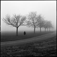 """""""Wollt ihr mit einer Wolke den Wind verfolgen?"""" (Konrad Winkler) Tags: berlin tempelhoferfeld nebel bäume winter weg strase passant mensch einsam langzeitbelichtung kodak400tmy hasselblad503cx epsonv800 zitatjamesfcooper"""