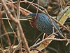 Green Heron 03-20180226 (Kenneth Cole Schneider) Tags: florida miramar westmiramarwca