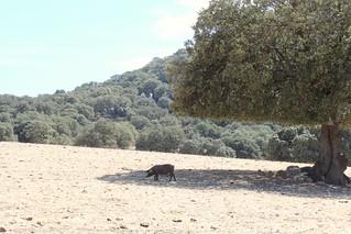 Andalusian memories