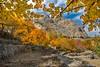 Fall has always been my favourite season. (khalilshah) Tags: fall season autumn skardu pakistan golden leaves sky blue orange yellow khalilshah photography finalenature time winter