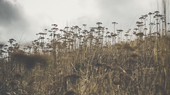 PB_012618_42 (losing.today) Tags: brianyoung oregon pacificnorthwest portland pdx portlandoregon portlandor winter nature outdoors naturepark plantlife plants moodyseason darkseason losingtoday