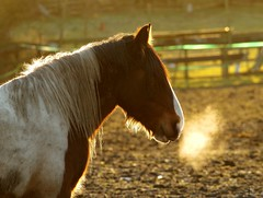 horse sunset back light (4) (Simon Dell Photography) Tags: uk garden brown nature wildlife simon dell photography sheffield shirebrook valley views horse silhouette s12 hackenthorpe 2018