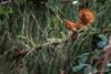 Roux, et j'en suis fier...! (minelflojor) Tags: écureuil arbre épicéa lichen nature zoom feuille branche squirrel tree spruce leaf branch