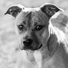 Princess14Jan201842-Edit.jpg (fredstrobel) Tags: pets animals blackandwhite dogs phototype pawsdogs decatur georgia unitedstates us