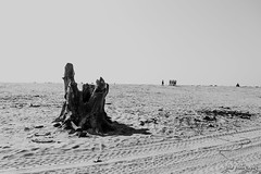 Wasteland (shamahzoha) Tags: landscape wasteland beach blackandwhite bw sand people distant foggy dystopia tree dead trunk remains abstract streetphotography bangladesh 7dwf minimal