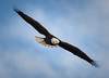 Caught My Attention (TroyMarcyPhotography.com) Tags: 20windchill action americanbaldeagle beautiful bird canon400mmf56l canon7d cloudy illinois iowa january mississippiriverbaldeagles2018 overcast cold nature wildlife
