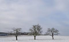 A wintery morning in December. (andreasheinrich) Tags: landscape trees field winter december morning overcast snowy cold germany badenwürttemberg neckarsulm dahenfeld deutschland landschaft bäume feld dezember morgen bewölkt verschneit kalt nikond7000