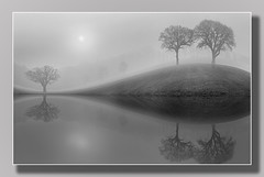 Reflections in the Mist ..