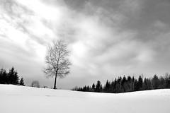 BW_WinterLandscape