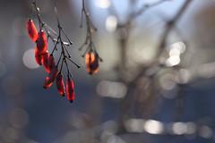 Coeur battant (Aurore.sc) Tags: macro rouge fruit