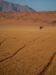 Infinite lines (Melvinia_) Tags: olympusomdem1 namibia namibie desert désert namibrand naukluft namibrandfamilyhideout landscape sand africa afrique afriqueaustrale geoafrica